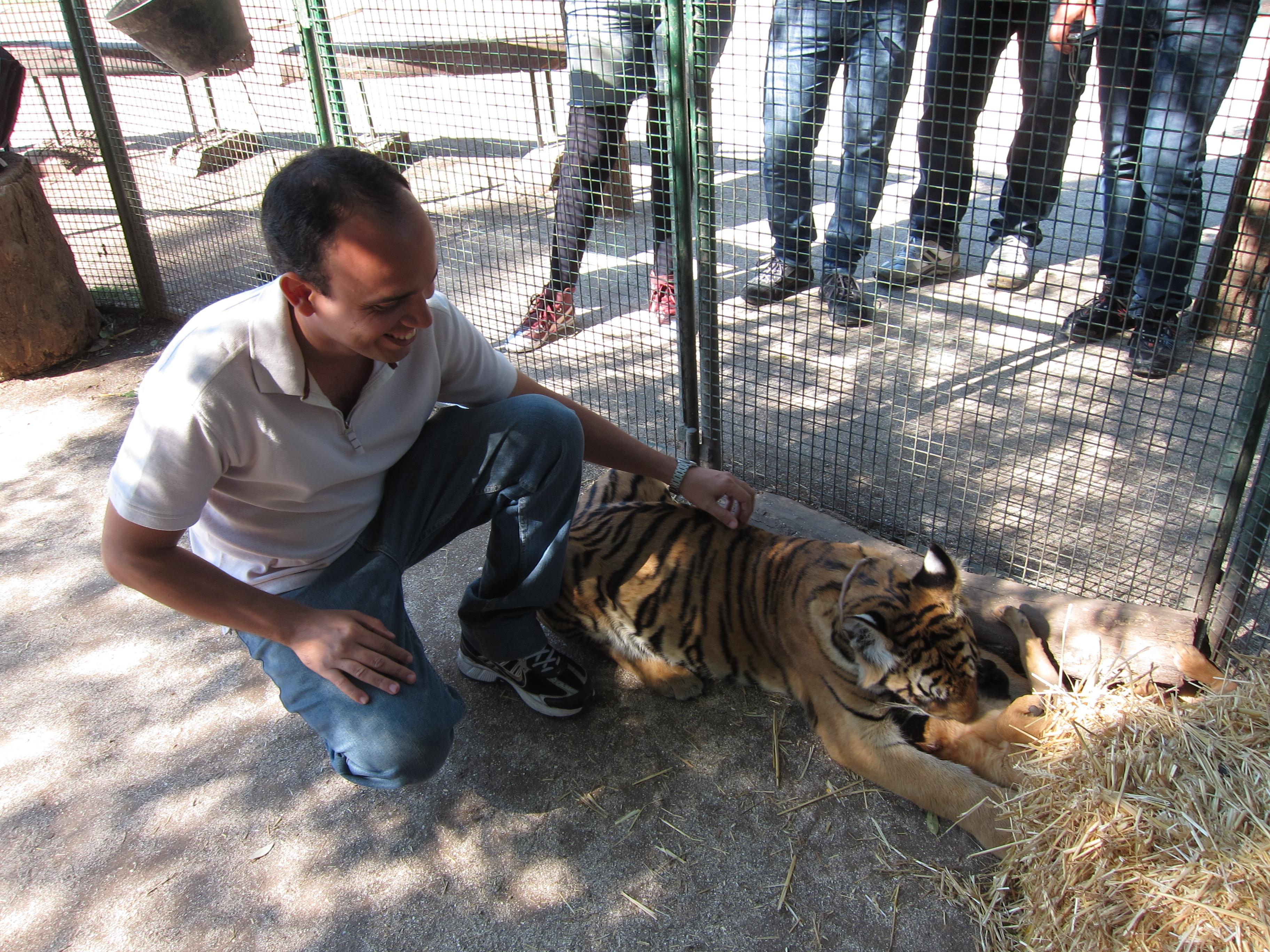 ali estava o tigre adolescente amarradão ainda lambendo o cachorro